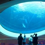 Museum of Science Exceeds 5 Million Visitors